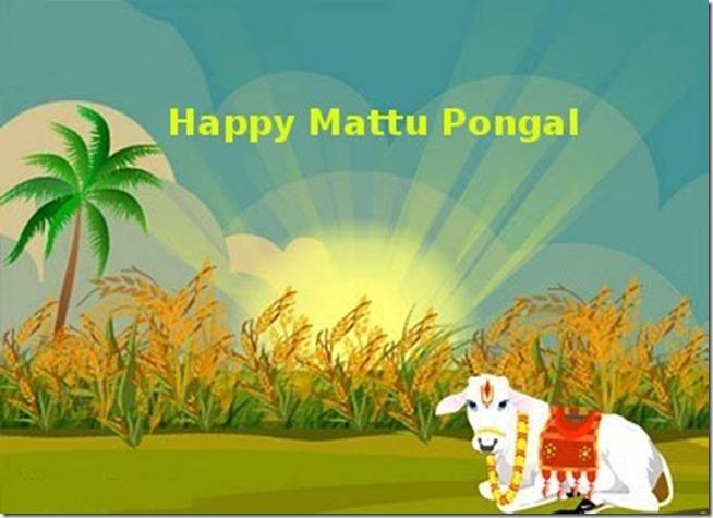 Mattu-Pongal2