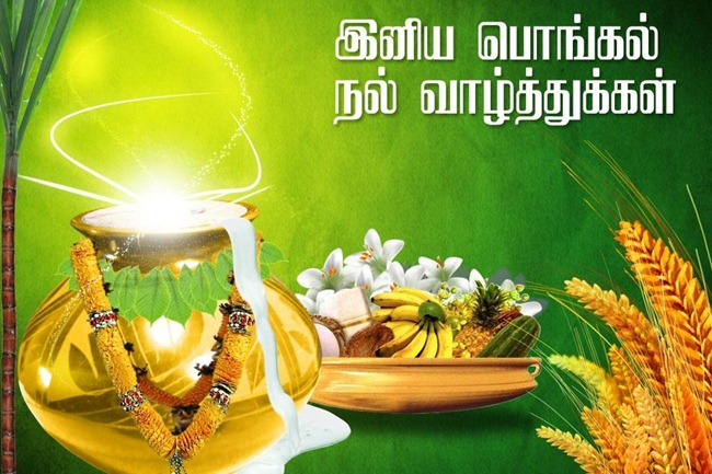 pongal-sms-wishes-in-tamil-Language-font-Tamil-sms-wishes-Pongal-2015